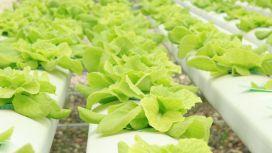 sostenibilita alimentare