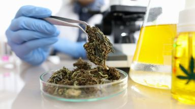 alzheimer,cannabinoidi,cannabis