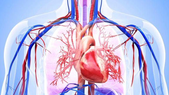 Malattie cardiovascolari MVC