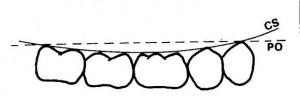 Altezza denti posteriori e anteriori