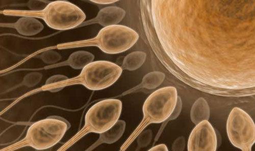 Spermatozoi che stanno per fecondare
