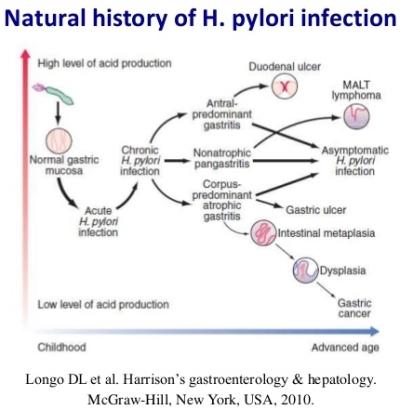 Evoluzione dell'infezione da HP