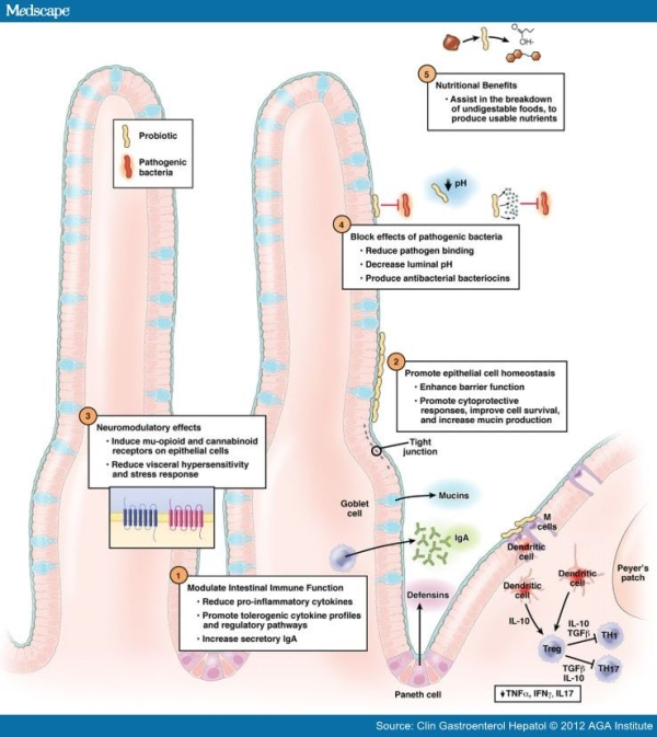 Ruolo dei probiotici