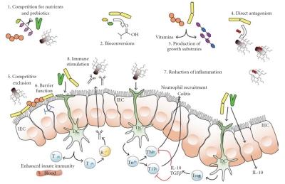 Azione dei probiotici