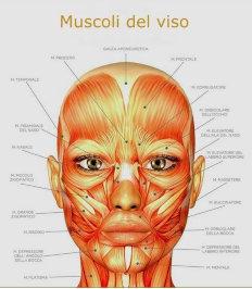 Muscoli del viso