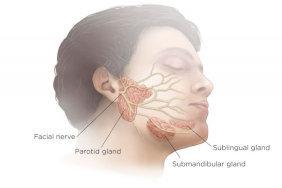 Scialorrea ghiandole