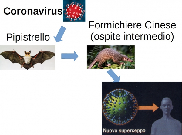 Passaggio coronavirus da animale a uomo