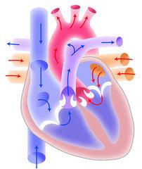 tachicardia