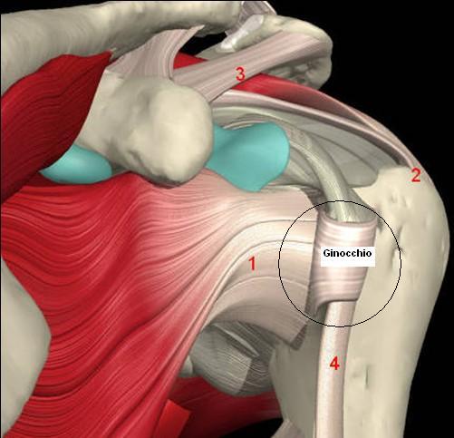 Dolore alla spalla destra e sinistra: cause e rimedi