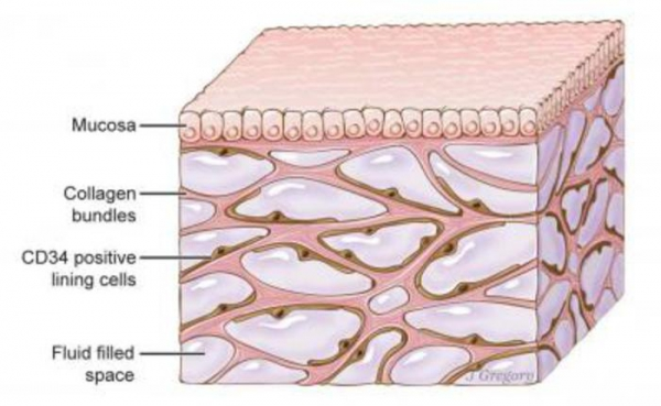 Tessuto connettivo