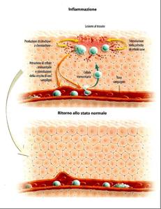 Epidermide infiammata ed epidermide normale