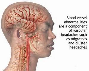 Dilatazione e costrizione delle arterie della circolazione cerebrale.