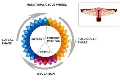 Calendario Del Ciclo Mestruale.Ovulazione Medicitalia It