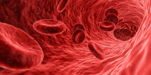 Ematologo cura malattie del sangue