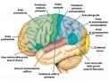 Il sistema operativo della mente: l'attaccamento