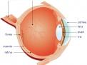 Allergie degli occhi, cause e rimedi