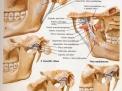 Disordine temporomandibolare e dolore facciale
