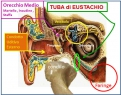 Malattia di Meniere e disfunzioni dell'articolazione temporo mandibolare
