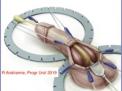 climacturia,Mini-Jupette,protesi-peniene,impotenza,prostatectomia-radicale,incontinenza