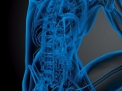 La riabilitazione delle funzionalità erettile dopo prostatectomia radicale: Domande e Risposte