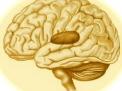 Esiti gliotici: devo preoccuparmi?