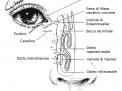 Eccessiva lacrimazione (epifora)
