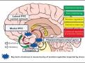 Può l'ansia provocare danni al cervello?