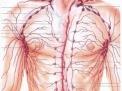 I linfonodi (o linfoghiandole), le adenopatie ed il sistema linfatico