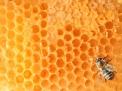 Allergia al veleno di api e vespe (imenotteri)