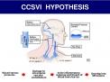 Insufficienza cerebrospinale venosa cronica (CCSVI) e Sclerosi Multipla