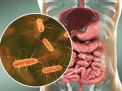 Il ruolo del microbioma intestinale nell'obesità